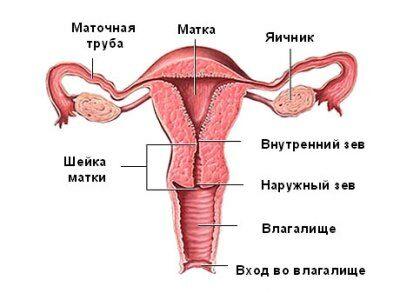 При беременности шейка матки