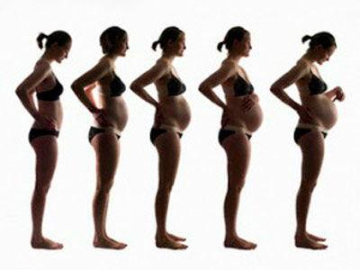 рост живота при беременности