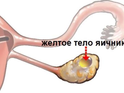 анализ на количество яйцеклеток