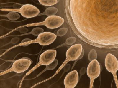 запас яйцеклеток женщины