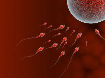 что влияет на качество яйцеклеток