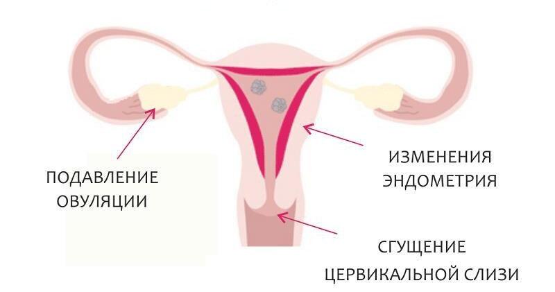 Гормональные контрацептивы: история и современность. Часть 1