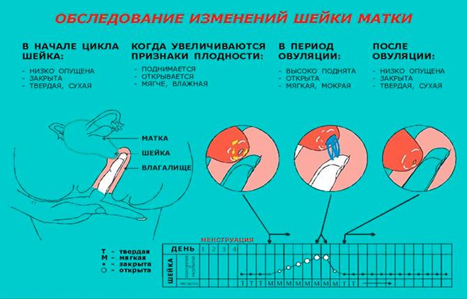 Как проверить изменения шейки матки