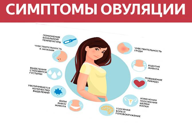 Симптомы овуляции