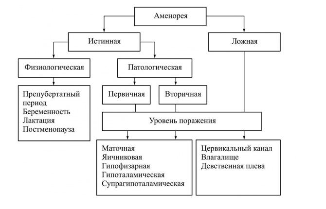 Классификация аменореи