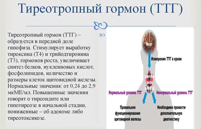ТТГ – тиреотропный гормон