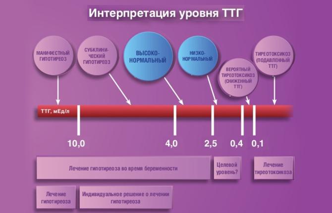 Расшифровка уровня ТТГ